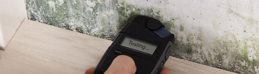 Mold assessment and testing
